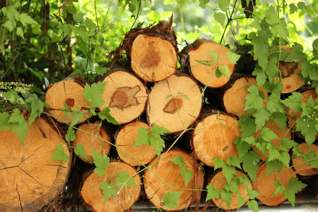 木の家を建てる際の注意点を紹介します!